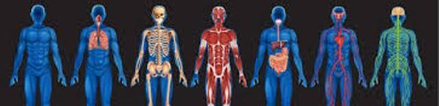 Human Physiology [BC-2503]