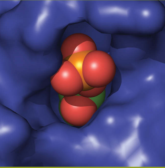 Enzymology [BT-5502]
