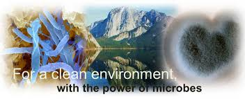 Environmental Biotechnology [BT-5504]